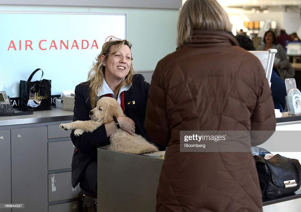 An Air Canada employee helps a traveler with a puppy check-in at Pearson International Airport in Toronto, Ontario, Canada, on Wednesday, Feb. 6, 2013. Air Canada, the country's biggest carrier, is scheduled to announce quarterly earnings data on Feb. 7. Photographer: Aaron Harris/Bloomberg via Getty Images