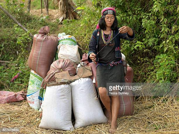 An Akha Cherpia ethnic minority woman spins cotton whilst waiting for the tractor to transport the bags of rice back to the village Ban Nam Hin...