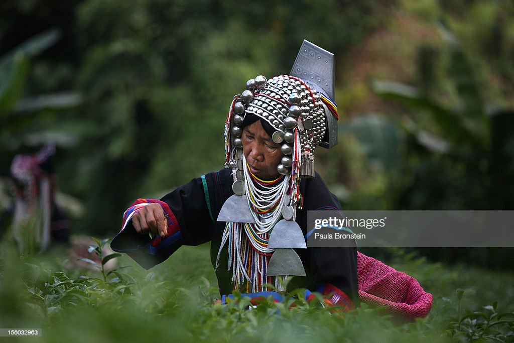 An Akha Hilltribe woman smiles as she picks Oolong #17 tea leaves during a harvest at the Suwirun Tea farm in the hills outside of Chaing Rai November 11, 2012 in Chiang Rai, Thailand. There are around 40 Akha hill tribe workers and 120 Burmese making 300 Bhat a day working on the family run Suwirun Organic tea farm. The farm has been in business around 38 years. The Tea is harvested every 45 days; collecting about 1.5 tons on average per harvest. On special occasions the Akha wear their traditional dress while picking tea. These days it is most commonly worn for tour groups and ceremonies.