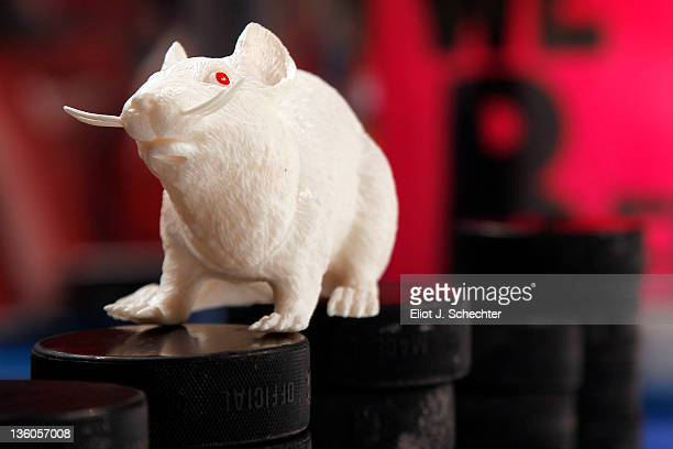 An albino plastic rat sits on practice pucks prior to the start of the game between the Florida Panthers and the Phoenix Coyotes at the BankAtlantic...