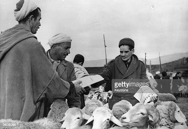 An Algerian distributing leaflets in the market place at Tizi-Ouzou, Kabylia, urging his compatriots to vote 'yes' to President Charles de Gaulle's...
