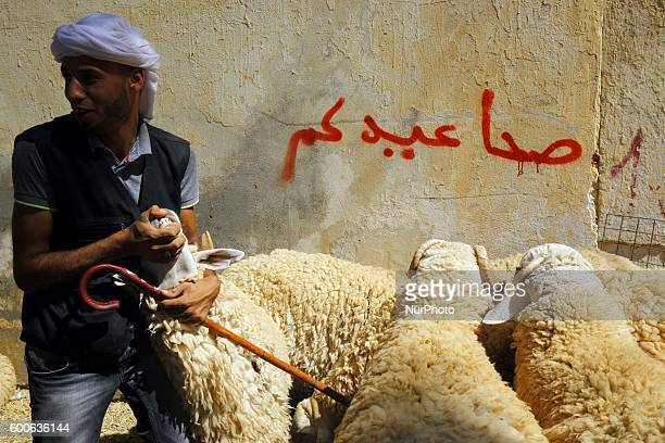 An Algerian vendor wait for customers at a livestock market in preparation for the upcoming Muslim Eid alAdha holiday or Feast of the Sacrifice in...