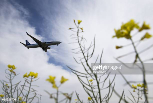 An All Nippon Airways Co aircraft flies over rapeseed flowers blooming at a field repaired after being damaged by the tsunami following the March 11...