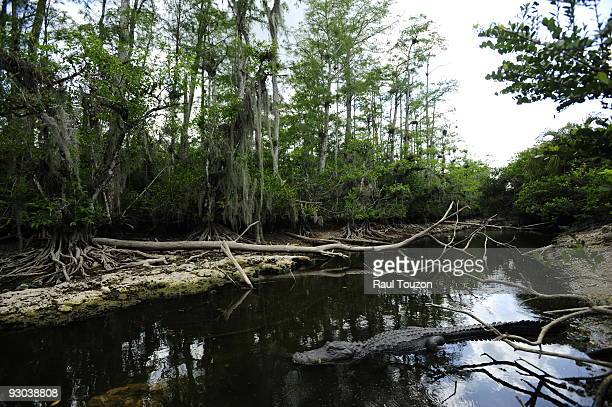 Big Cypress National Preserve, Florida.