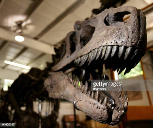 An Allosaurus skeleton sits in the Phil Fraley Productions warehouse in Paterson New Jersey Tuesday August 8 2006 Hidden on a side street in New...