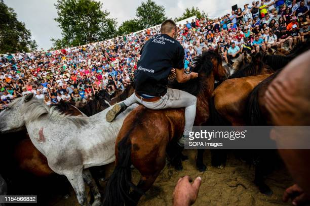 An aloitador struggles with a wild horse at the curro during the Rapa Das Bestas traditional event in the Spanish northwestern village of Sabucedo...
