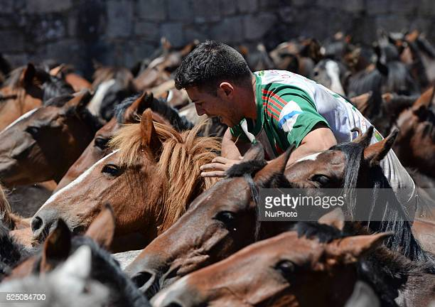 An Aloitadore in action during taming wild horses during the rapa das bestas in Sabucedo, Galicia. During the more than 400-year-old festival, that...