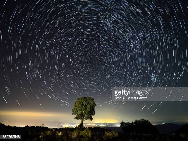 An alone tree on the top of a mountain, a night with the starry sky and a landscape of high mountain with the lights of the cities and the stars, star trail with the north star. Valencian Community, Spain.