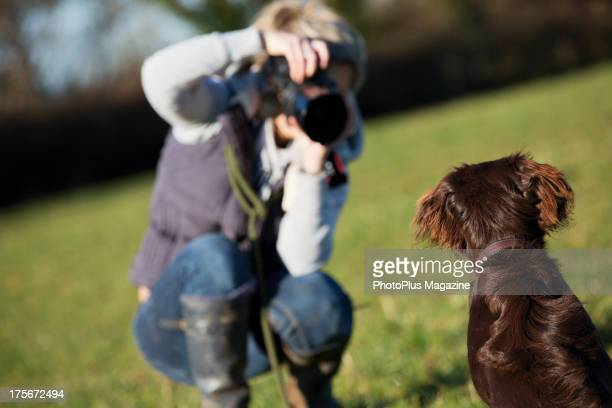 An amateur photographer taking pictures of a chocolate-coloured Flat-Coated Retriever, taken on December 18, 2012.