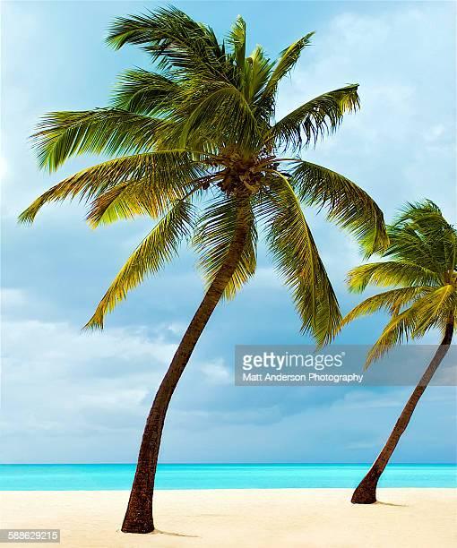 an amazing beach. - isla de antigua fotografías e imágenes de stock