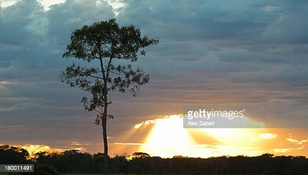 an amazing sunrise in the pantanal wetland. - alex saberi foto e immagini stock
