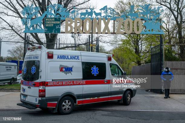 An ambulance arrives at a parking lot at the Bronx Zoo on April 23 2020 in New York City Seven more big cats have reportedly tested positive for the...