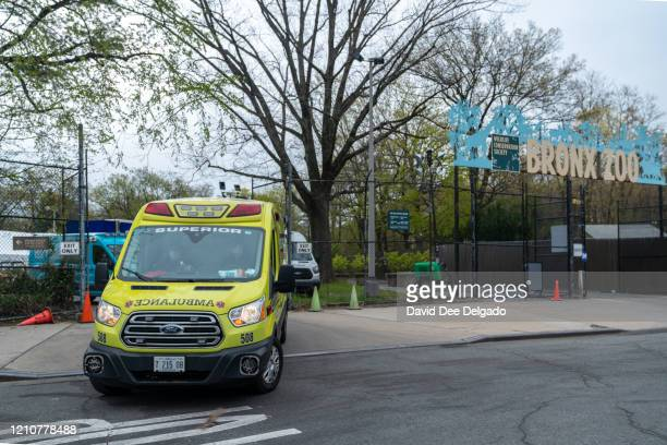 An ambulance departs from a parking lot at the Bronx Zoo on April 23 2020 in New York City Seven more big cats have reportedly tested positive for...