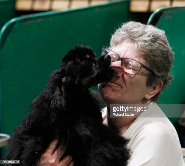 An American Cocker Spaniel licks his owner on the face on day four of the Cruft's dog show at the NEC Arena on March 11, 2018 in Birmingham, England....