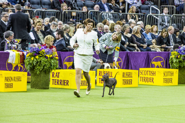 inside the westminster kennel club dog showの写真およびイメージ