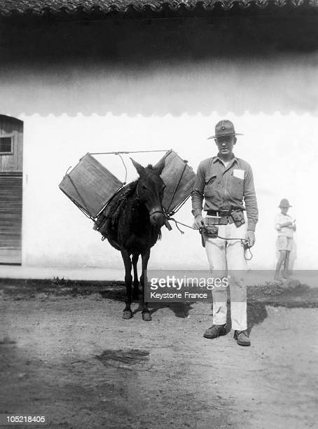 An American Marine Posing Beside A Donkey Carrying Voting Ballots From Matagalpa To The Capital After The Vote For The Presidential Elections On...
