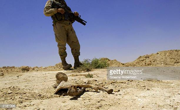 An American soldier guards a mass grave site July 21 2003 near the city of Mosul northern Iraq The US military said that a mass grave was uncovered...