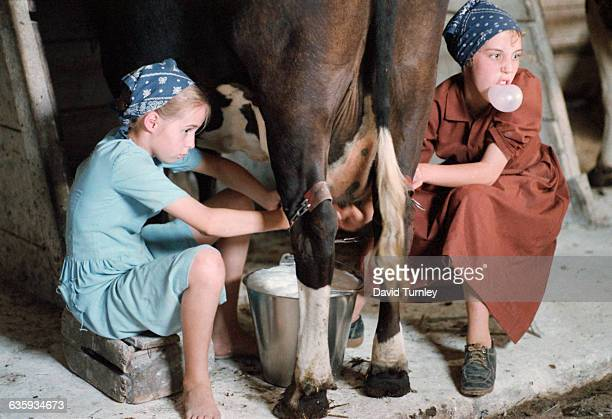 An Amish girl blows a chewing gum bubble as she milks a cow | Location Near Shipshewana Indiana USA