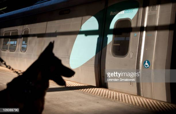 An Amtrak Police K9 sits on the platform near the Acela Express trains during 'Operation Railsafe' at Union Station October 8 2010 in Washington DC...