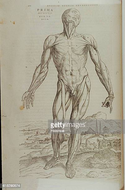 An anatomical diagram of a man illustrating the first muscle plate of the human body