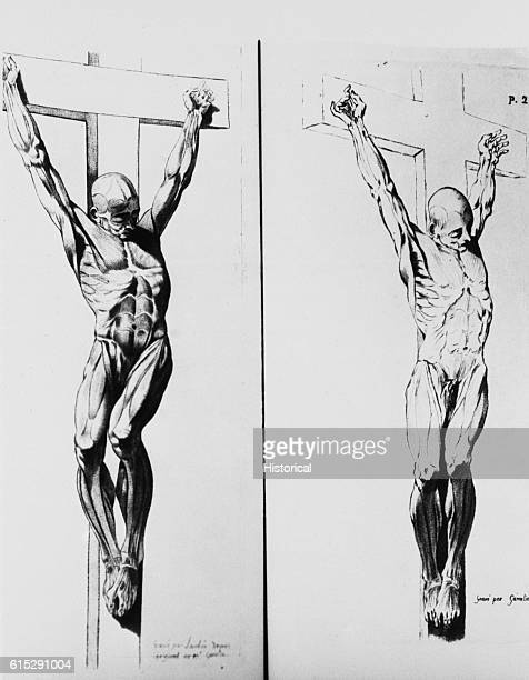 An anatomical diagram of the crucifixion of two men illustrating the musculature of the human body