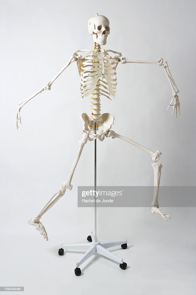 An anatomical skeleton model running and jumping : Stock Photo