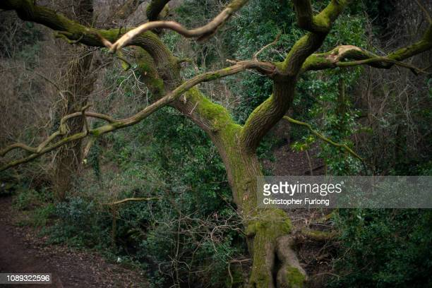 An ancient tree grows at Moseley Bog believed to be the inspiration for Tolkien's ancient forests in his books The Lord of the Rings and The Hobbit...