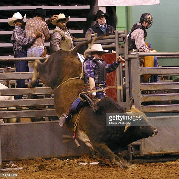 An Angelo cowboys hangs on to a bull as it bolts out of the gate during the National Black Rodeo Finals on November 13 2004 at the CenturyTel Center...