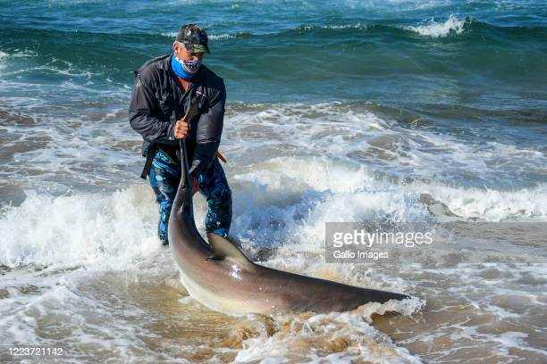 An angler catches and releases a bronze shark during the Sardine run in Scottsburg on June 28, 2020 in Durban, South Africa. The Sardine Run...