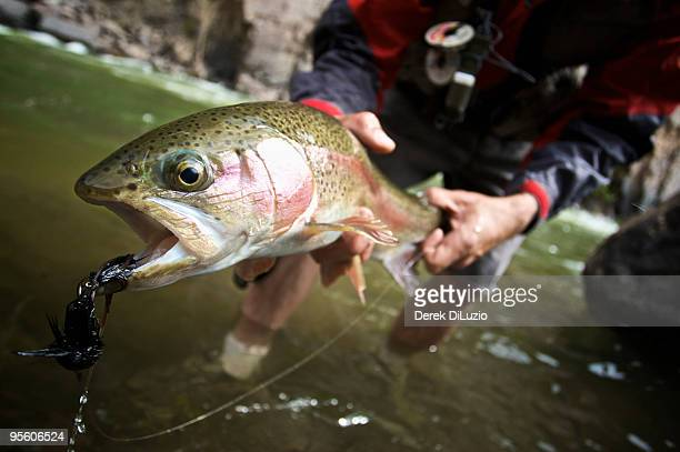 An angler holds up a Rainbow Trout in Black Canyon National Park.