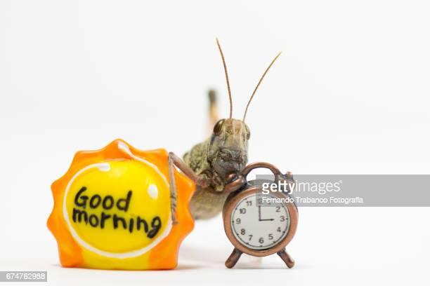 an animal insect grasshopper good morning at 3 o'clock - klokkentoren met wijzerplaat stockfoto's en -beelden