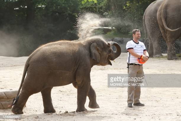 An animal keeper wearing a jersey in the colors of Germany and holding a football stands next to a baby elephant throwing sand over itself on June...