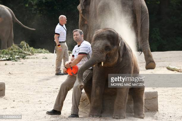 An animal keeper wearing a jersey in the colors of Germany and holding a football sits next to a baby elephant on June 28, 2021 at the Tierpark...