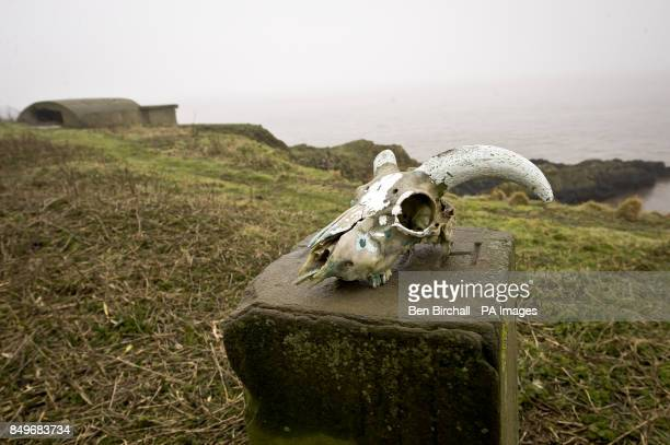 An animal skull on Flat Holm island in the Bristol Channel Flat Holm is a limestone island in the Bristol Channel approximately 6 km from Lavernock...