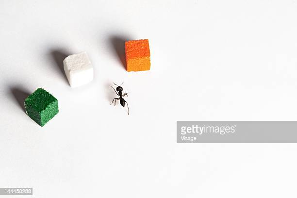 An ant heading towards a tri-coloured sugar cubes