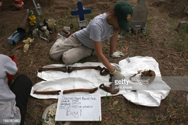 An anthropology student reassembles the bones of a suspected undocumented immigrant after the remains were exhumed from a gravesite on May 22 2013 in...