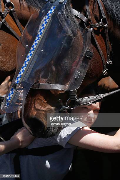 An anti racism protester pushes against a police horse during a Reclaim Australia rally held in Melton on November 22 2015 in Melbourne Australia...