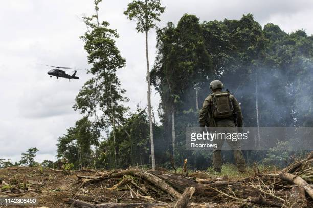 An anti-narcotics police officer stands as a police helicopter flies over a coca field during an operation in Tumaco, Narino department, Colombia, on...