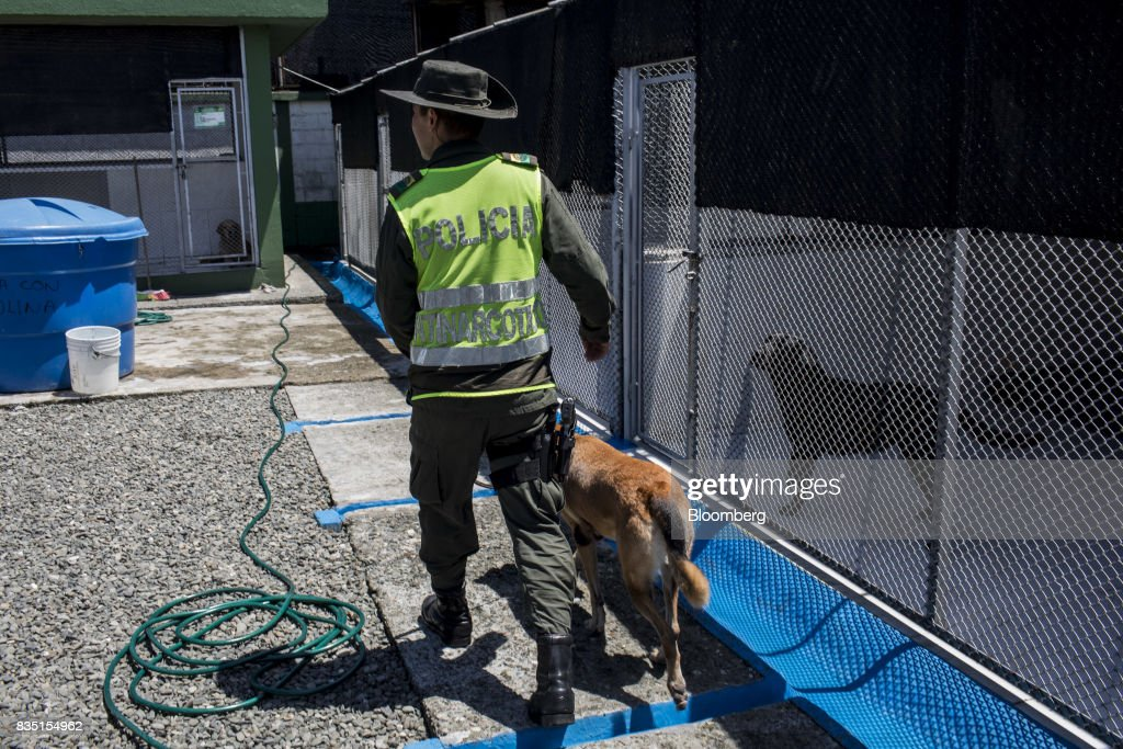 An anti-narcotics police officer walks with a service dog in Buenaventura, Colombia, on Thursday, Aug. 10, 2017. The United Nations Office of Drugs and Crime (UNODC) released a report stating that coca crops in Colombia has increased over fifty percent in one year. The Trump administration has been putting pressure on Colombia to curb the flow of drugs into the U.S. Photographer: Nicolo Filippo Rosso/Bloomberg via Getty Images