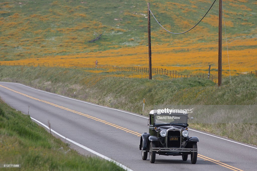 An antique car passes wildflowers along California State Route 223 on March 4, 2016 west of Tehachapi, California. Despite hopes that the major El Nino effect would bring drought-busting rains to southern California, the storms have been missing the region, delivering only half the rain of a normal year. After a brief period of heavy rain in January, Southern California experienced one of the hottest Februarys ever recorded, prompting early scenic wildflower blooms in several desert and foothill regions.