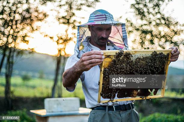 An apiarist is checking hives in Anig village Qusar district Azerbaijan on 6 October 2016 Anig is an ancient mountain village inhabited mostly by...
