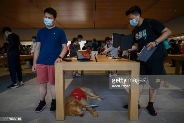 An Apple employee left stands next to his service dog as he waits for customers at the official opening of the new Apple Store in the Sanlitun...