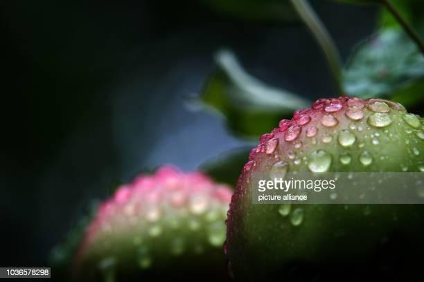 rain am lech ストックフォトと画像 getty images