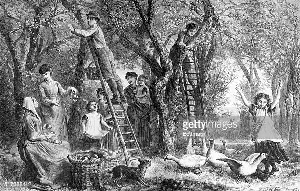 An apple orchard with pickers Undated engraving BPA2# 4346