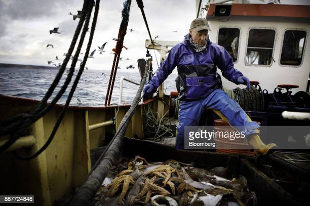 An apprentice fisherman sorts out a catch of net caught fish on the deck of the Harvest Reaper fishing trawler approximately 18 nautical miles...