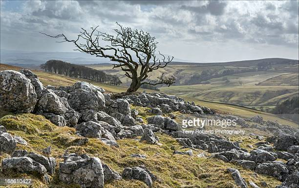 an april blast - north yorkshire stock pictures, royalty-free photos & images