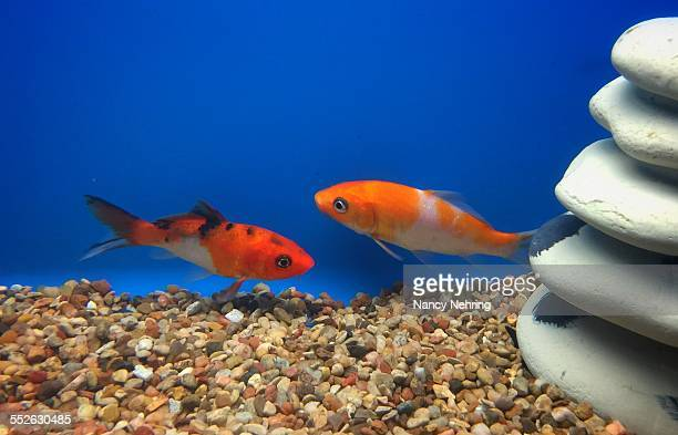 An Aquarium Of Your Own