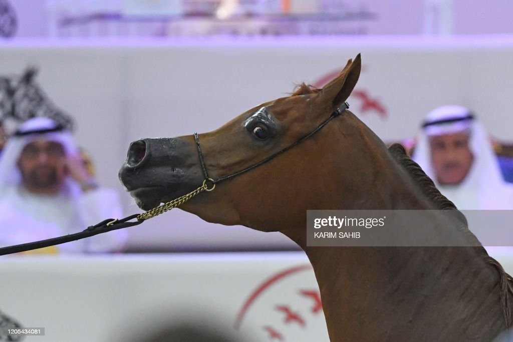 An Arabian Horse Owned By Don Olvey Is Paraded During The 21th News Photo Getty Images