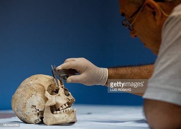 An archaeologist measures a skull that belonged to a preHispanic indigenous man at the PreHispanic Ossuarty in Cali Colombia on September 30 2013 The...