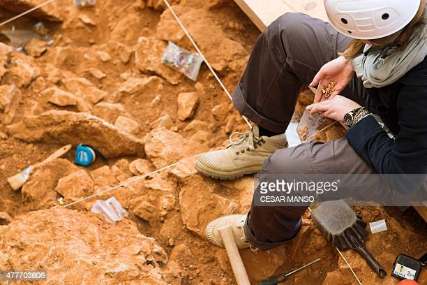 An archaeologist places small bones in a plastic bag as she takes part in the beginning of an excavation at the Gran Dolina site part of the...